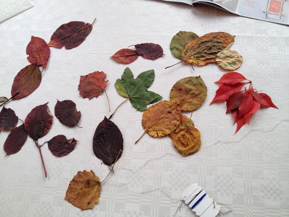 Blätter-getrocknet