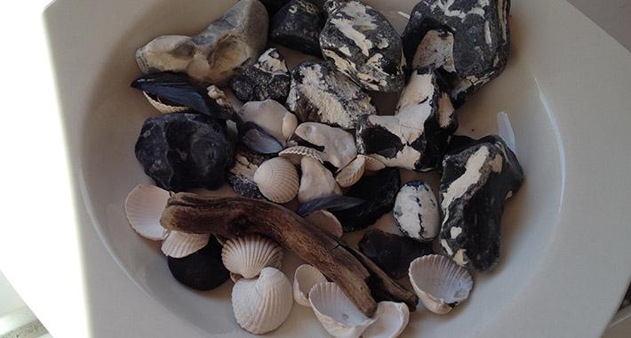 Steine-Muscheln