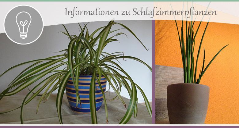 Schlafzimmer gestalten – Teil 5 – Tipps zu Pflanzen ...