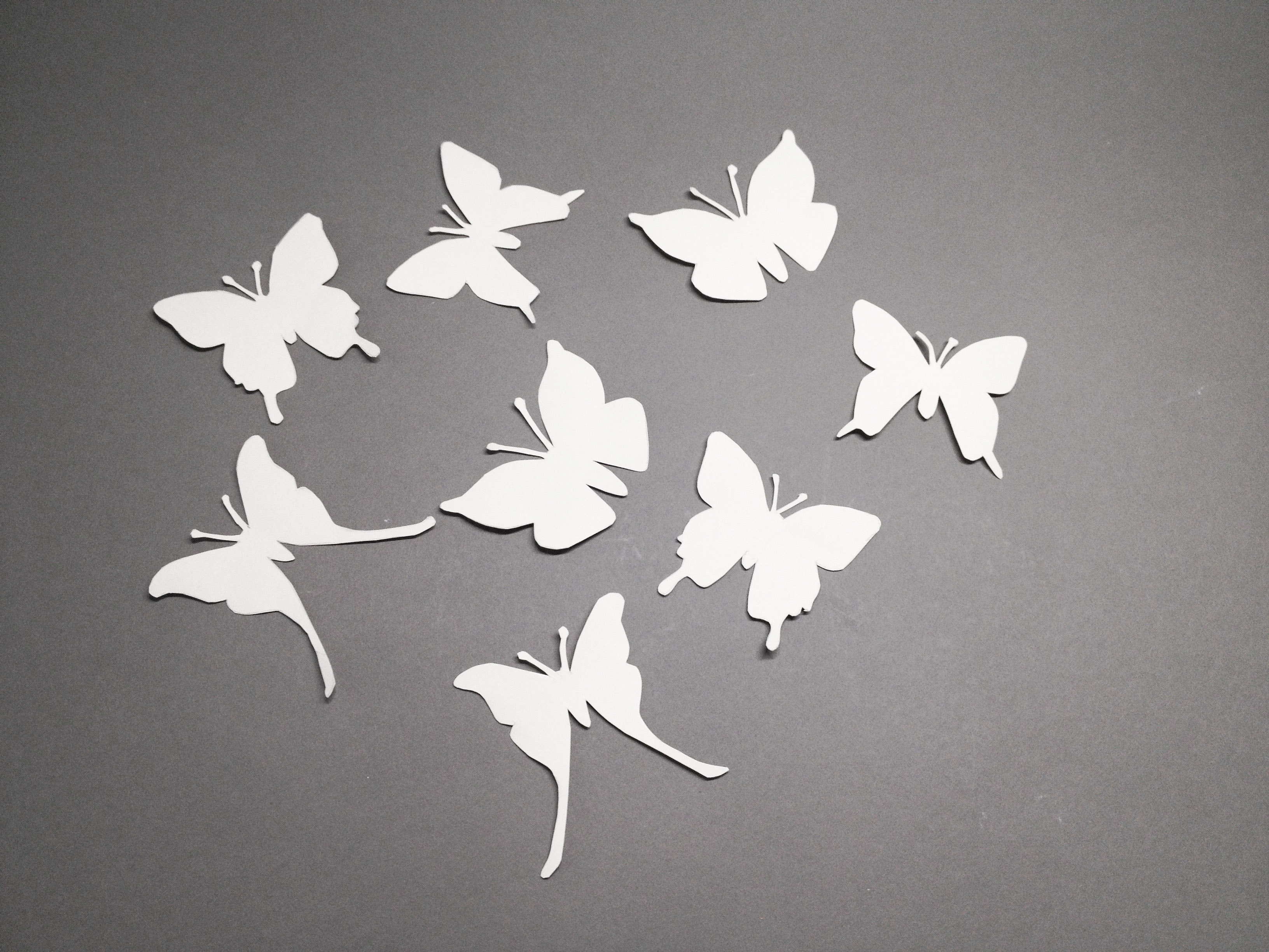 Schmetterlingsglas8
